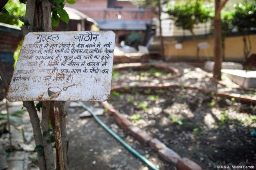 Inde-jardin-ayurvedique