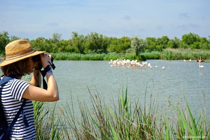 Camargue, observation de flamants roses