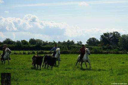 Camargue, gardian à cheval