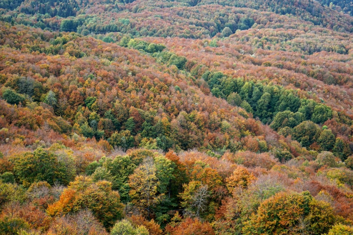 Ain, Plateau de Retord, couleurs automnales