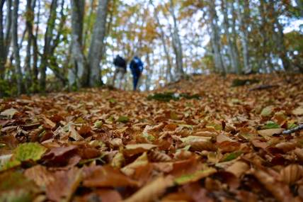 Ain, Plateau de Retord, feuilles mortes