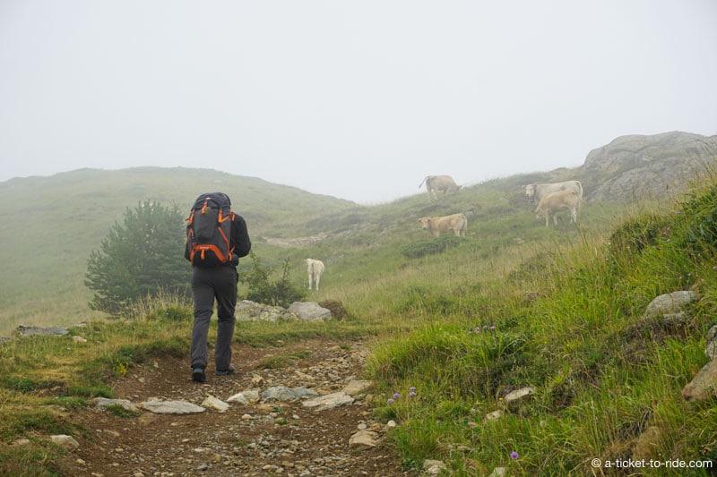 Pyrénées, brouillard et vaches