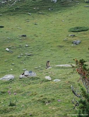 Cirque d'Estaubé, marmotte