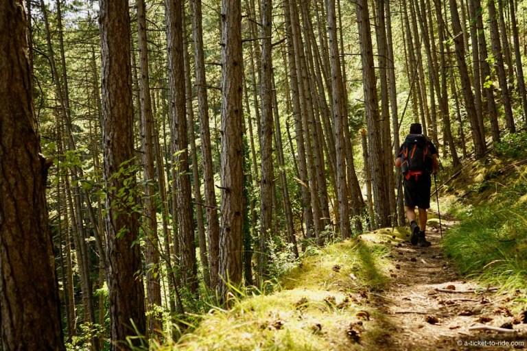 Forêt sur le Chemin de St-Guilhem