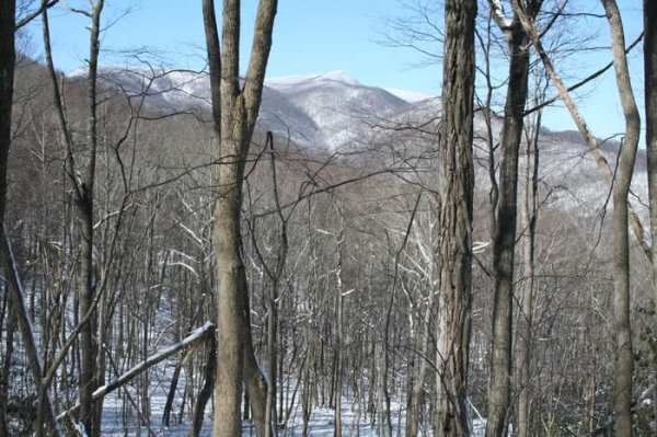 Ashe County Woodlands Winter View