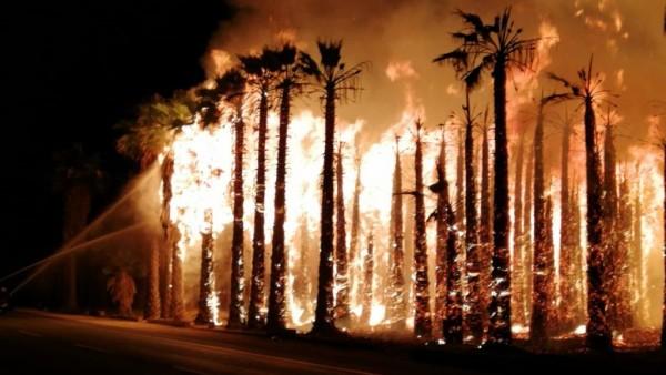 Imagen de palmeras ardiendo en Elche. CONSORCIO PROVINCIAL DE BOMBEROS DE ALICANTE Ver más en: https://www.20minutos.es/noticia/3687580/0/miles-palmeras-arden-cuatro-incendios-elche/#xtor=AD-15&xts=467263