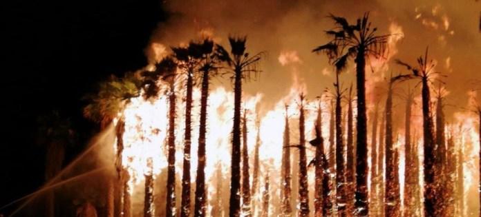 Detenido al presunto pirómano responsable de los últimos incendios en los huertos de palmeras en Elche