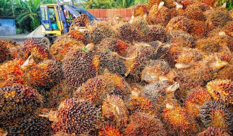 ¿De verdad es tan nocivo el aceite de palma?
