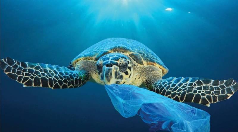 Tortugas verdes comen plástico que confunden con algas marinas