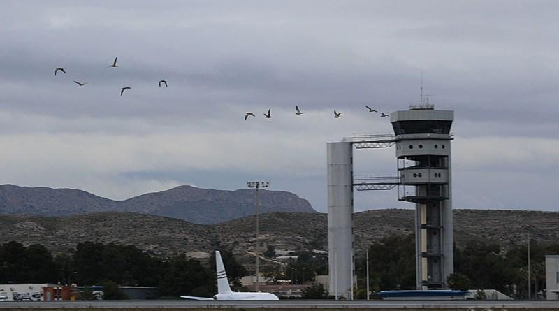 Hoy 20 de enero de 2020, estos pájaros que ven ustedes en la fotografía serán los únicos que vean volar por aquí
