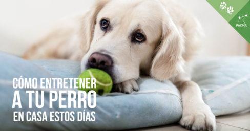 Cómo entretener a tu perro sin salir de casa