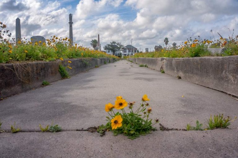 Imagen: Daniel Ray Photography – Shutterstock.