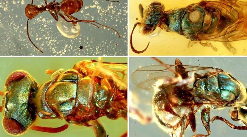 Unos increíbles fósiles en ámbar han revelado el verdadero color que tenían los insectos hace 99 millones de años