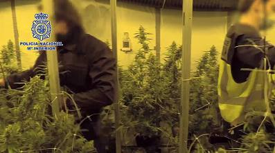 Policia nacional cultivo marihuana 1