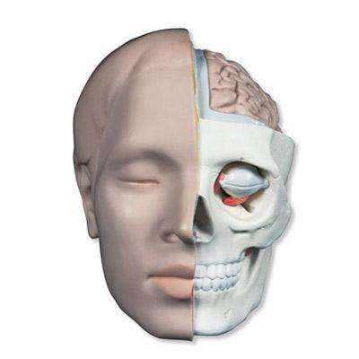 Anatomy: Insides outside