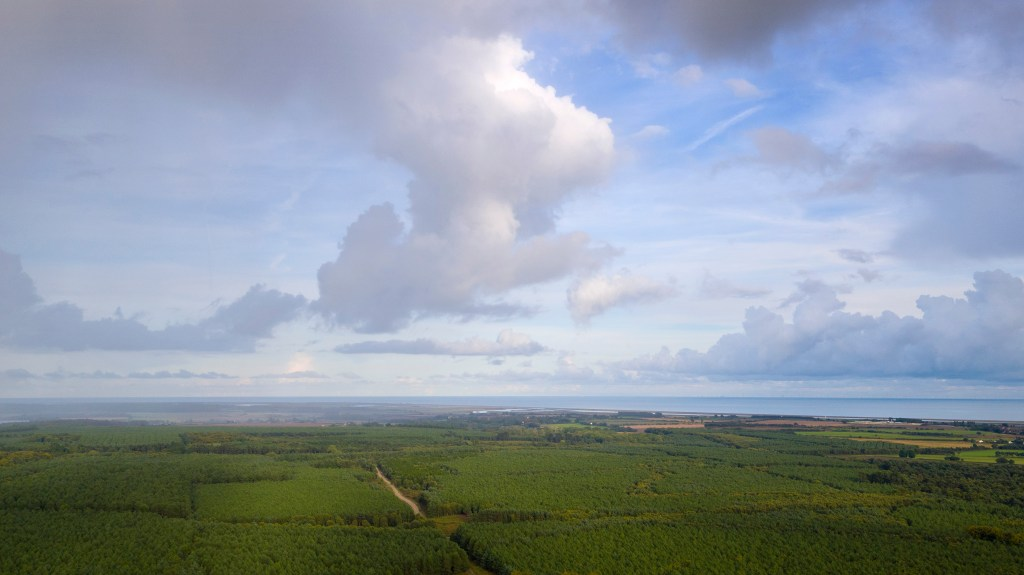 An aerial photograph of a forest and the suffolk coastline