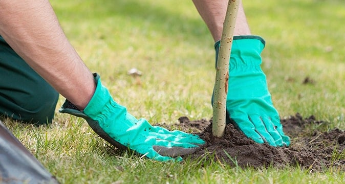 Planting Trees in the Spring