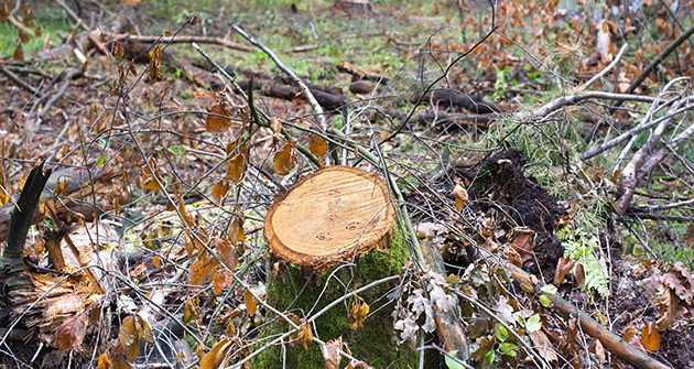 TREE STUMP REMOVAL IS A GREAT IDEA