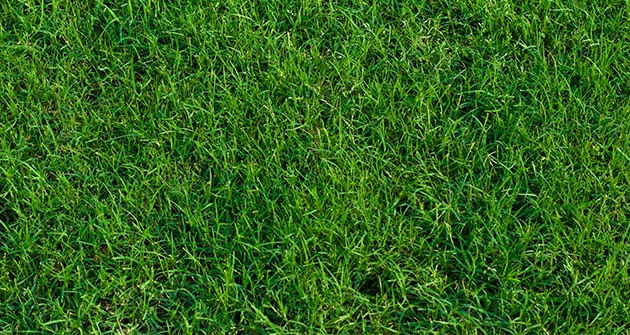 How To Take Care of a Bermuda Grass Lawn In Winter