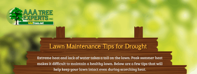 Lawn maintenance tips for drought