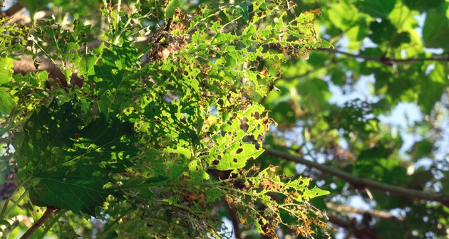 Let's learn how to diagnose tree diseases