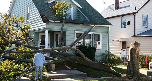 How to Resolve the Aftermath of Storm Damaged Trees