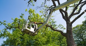 Importance of Professional Pruning