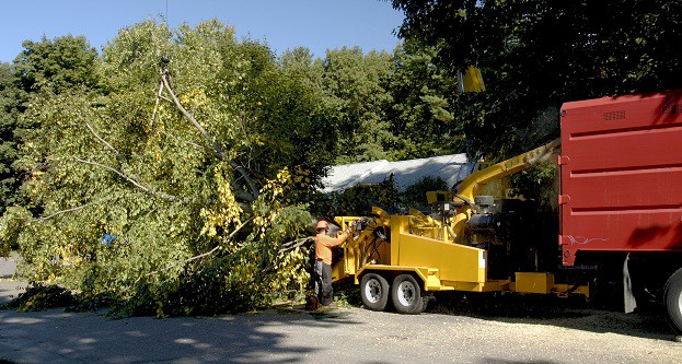 Top 5 Tips for Emergency Tree Removal