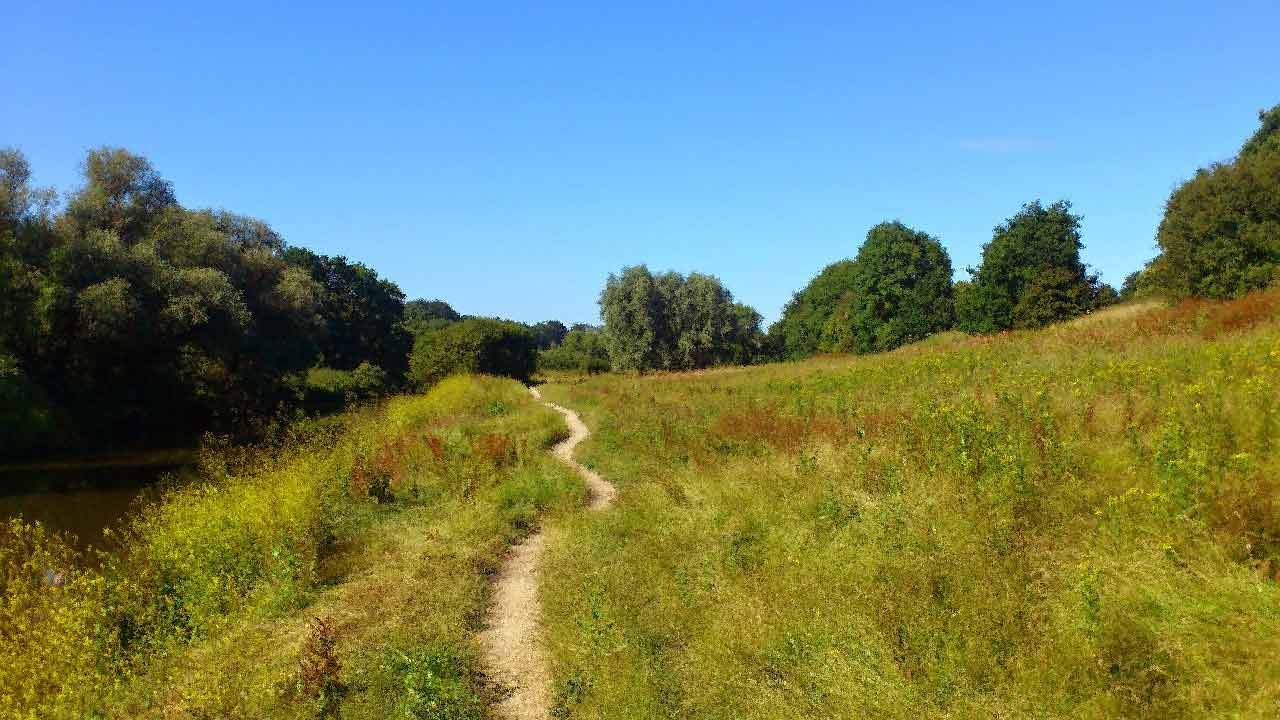 Trail through meadow, for the Ann Arbor Center for Mindfulness/
