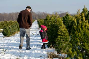 picture of a grandparent with grandchild at a Christmas tree (or xmas tree) farm