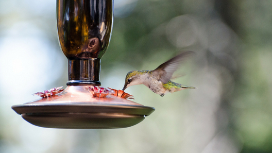 Protecting Your Bird Feeder From Rodents