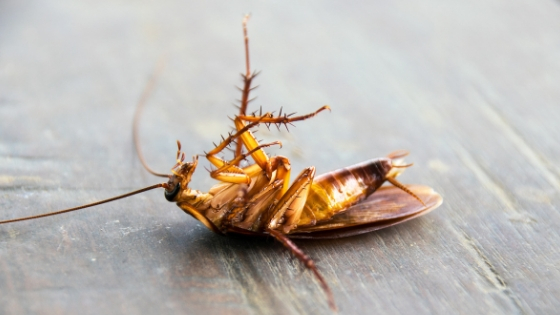 what do dead roaches in the house mean