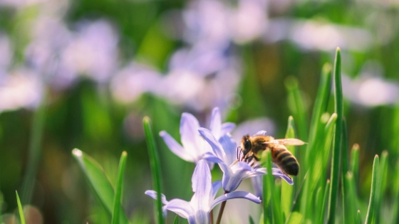 AAI Pest Control - 5 spring pest control tips