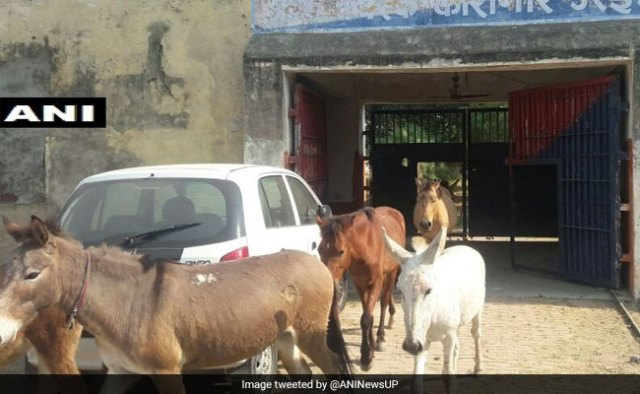 up police detained donkeys गधों