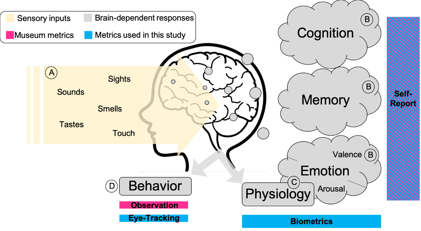 A diagram of a brain, showing how sensory inputs enter it from the environment, how those are translated into experience, and how metrics can be used to evaluate those experiences.