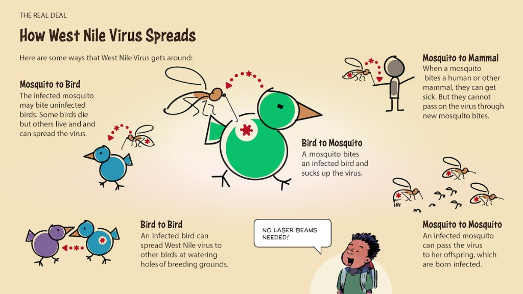 "A diagram explains ""How West Nile Virus Spreads,"" with subheaders for ""Mosquito to Bird,"" ""Bird to Bird,"" ""Bird to Mosquito,"" ""Mosquito to Mammal,"" and ""Mosquito to Mosquito."""