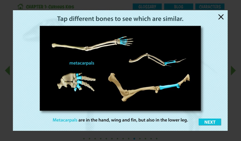 "The screen reads ""Tap different bones to see which are similar."" ""Metacarpals"" is selected, and the definition reads ""Metacarpals are in the hand, wing and fin, but also in the lower leg."""