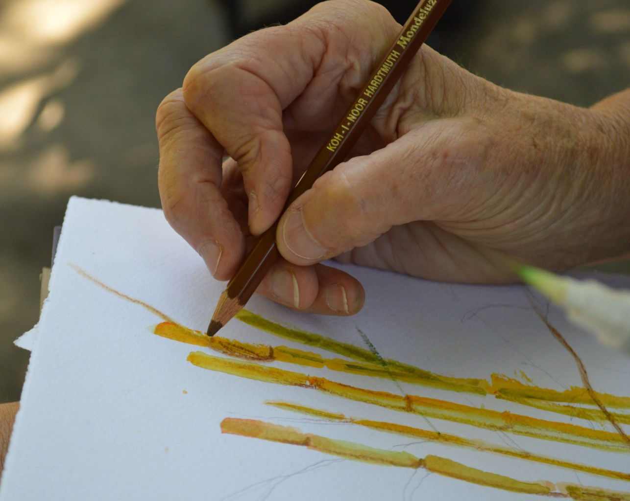 A close-up of a hand holding a colored pencil, drawing stalks of bamboo on paper.