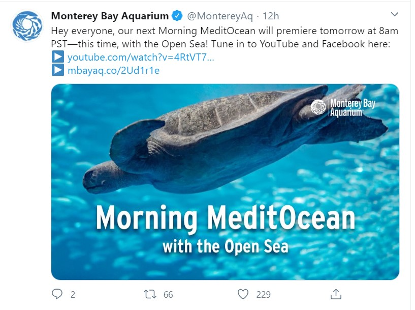 "A tweet from Monterey Bay Aquarium reading, ""Hey everyone, our next Morning MeditOcean will premiere tomorrow at 8am PST—this time, with the Open Sea! Tune in to YouTube and Facebook here:"""