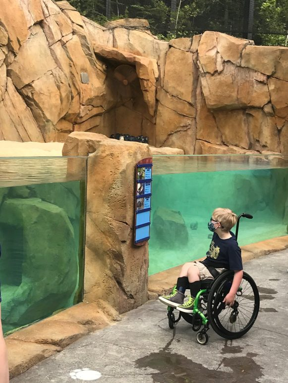 A young visitor looking at a zoo exhibit from a wheelchair