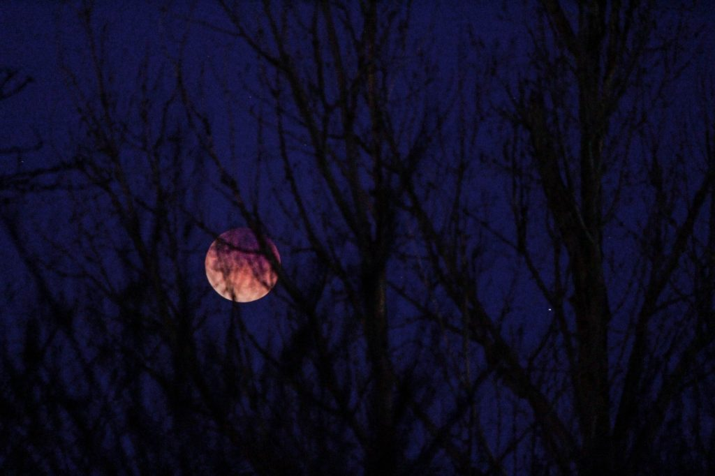A moon visible behind bare trees