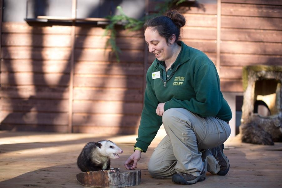 A zoo staff person kneeling down to play with an animal in the zoo