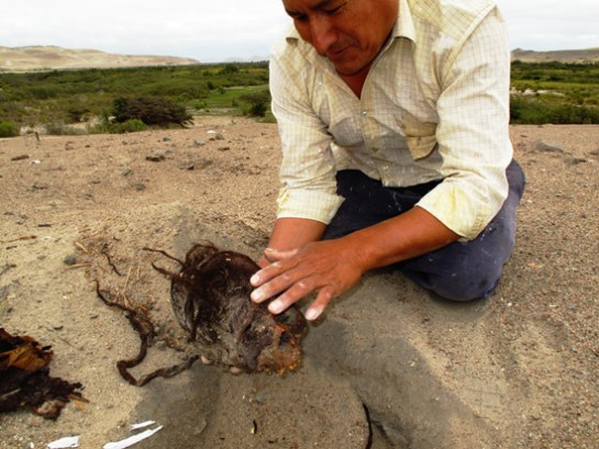 Resultado de imagen de i millon de momias en egipto