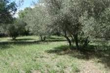 Bouwkavel-Uzes-Gard