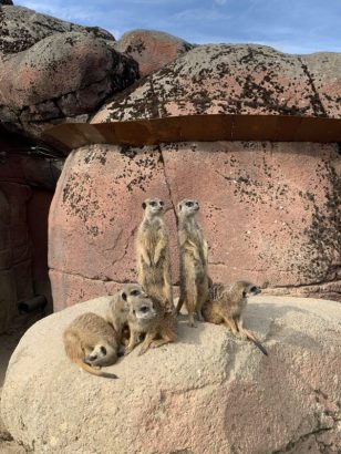 Wat te doen in Zuid-Limburg Gaia zoo kerkrade