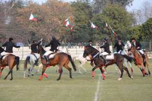 Aligarh Muslim University arranged a special Horse Show for the visiting NAAC team