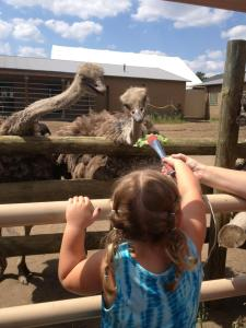 Ostriches are FAST eaters