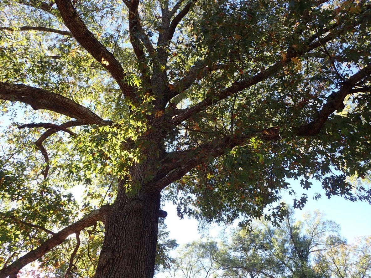 Creator of Leaves - A poem - Aaron Blakeley- Blogger Writer Poet