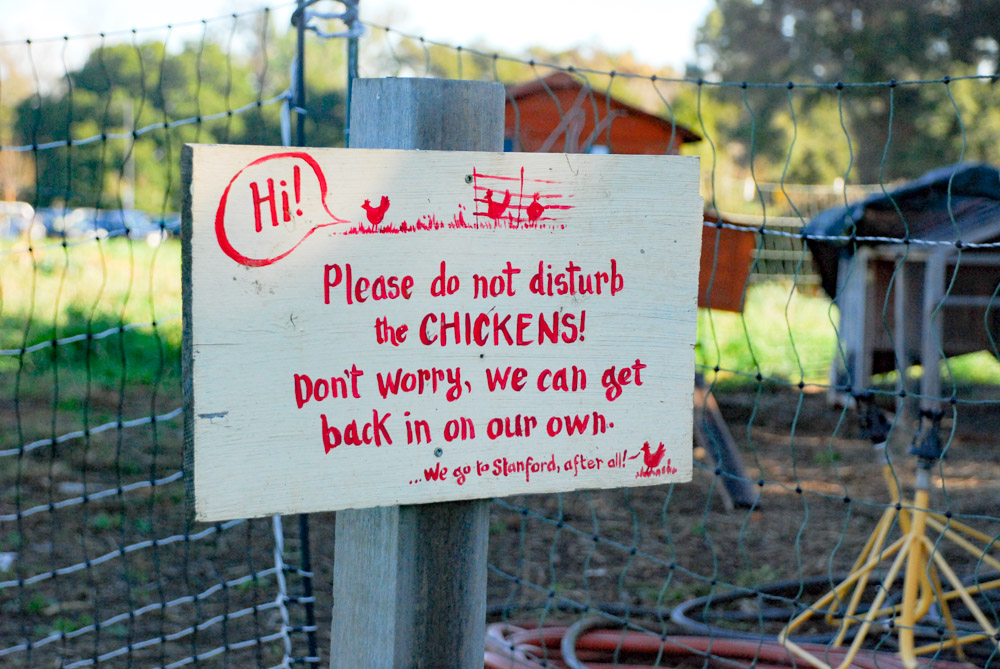 Do Not Disturb The Chickens