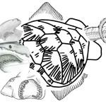 Three-Headed Turtle Shark